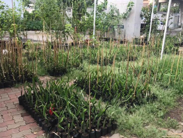 આજે ડો. શ્રીનિવાસ 12 એકર જમીન પર ડ્રેગન ફ્રુટની ખેતી કરી રહ્યા છે. લગભગ 30 હજાર પ્લાન્ટ્સ છે. 80 ટન સુધીનું ઉત્પાદન તે કરે છે.