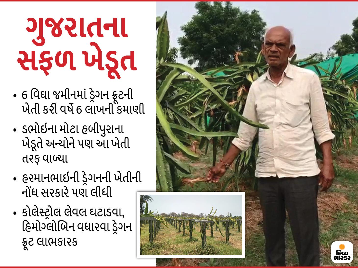 ચાઇનીઝ ફળ ગણાતા ડ્રેગન ફ્રૂટની મોદીના ગુજરાતમાં ખેતીઃ ડભોઈના ખેડૂત 6 વીઘાના પાકમાં વર્ષે મેળવે છે 6 લાખનો નફો ઓરિજિનલ,DvB Original - Divya Bhaskar