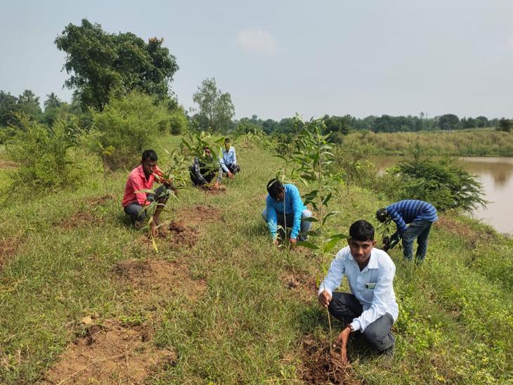 ઝરપણના ગામે યુવકો દ્વારા વૃક્ષારોપણ કરાયું|વાંકલ,Vankal - Divya Bhaskar