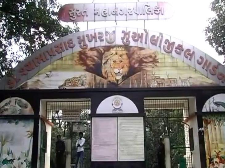 પ્રાણી સંગ્રહાલયમાં મુલાકાતીઓની સંખ્યા નિયંત્રિત કરવા માટે પાલિકાએ ઓનલાઇન ટિકિટથી જ એન્ટ્રી આપવાનો નિર્ણય કર્યો. - Divya Bhaskar
