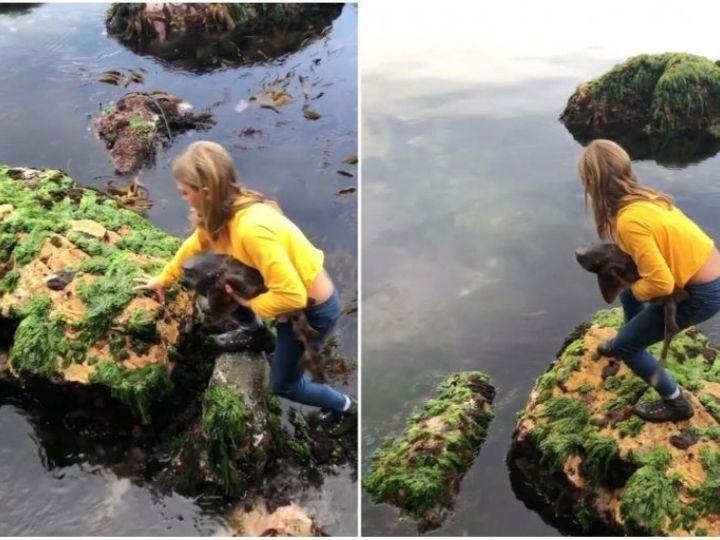 ઓસ્ટ્રેલિયામાં 11 વર્ષની બિલીએ શાર્ક માછલીનો જીવ બચાવ્યો, ડર્યા વગર કિનારે ફંસાયેલી શાર્કને પાણીમાં મુક્ત કરી લાઇફસ્ટાઇલ,Lifestyle - Divya Bhaskar