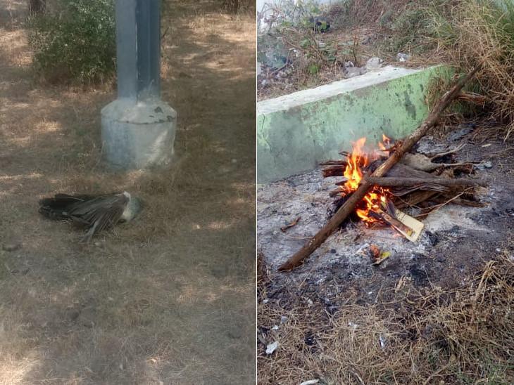 ઢેલના મોત બાદ મૃતદેહની અંતિમ વિધિ કરવામાં આવ હતી. - Divya Bhaskar