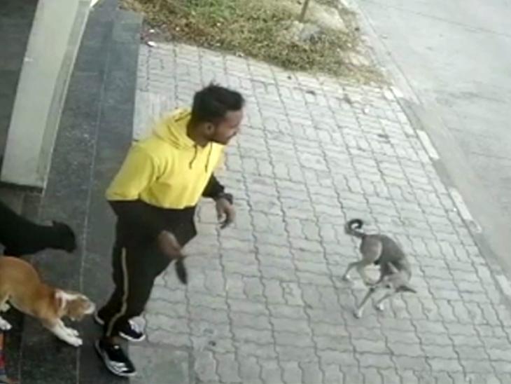 ઇન્દોરમાં ધોળા દિવસે બે યુવકે કરી કૂતરાની ચોરી, ઘટના CCTV કૅમેરામાં કેદ ઈન્ડિયા,National - Divya Bhaskar