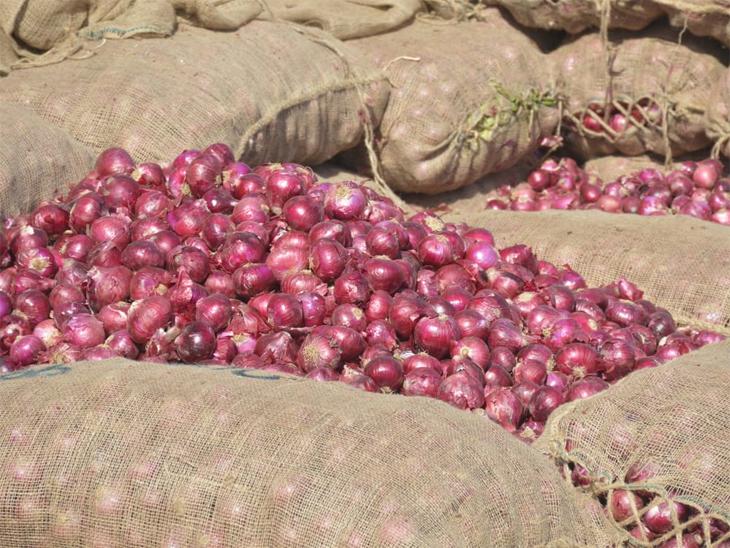 આવનારા સમયમાં ડુંગળીના ભાવમાં ખેડૂતોને ઓપન બજારમાં વધુ સારા ભાવ મળે તેવી આશા છે