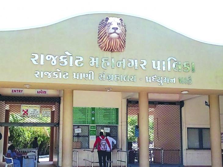 બર્ડ ફ્લુને ધ્યાને લઇ રાજકોટના પ્રદ્યુમન પાર્ક પ્રાણી સંગ્રહાલયમાં આવેલું પક્ષીઘર આવતીકાલથી બંધ|રાજકોટ,Rajkot - Divya Bhaskar