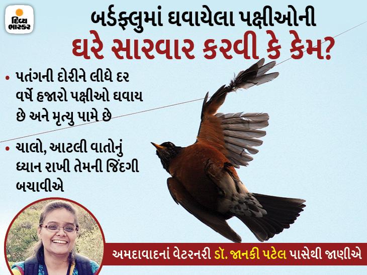 પતંગની દોરીથી ઘાયલ પક્ષીને ખુલ્લા હાથે અડકવાથી બર્ડફ્લુનું જોખમ, પક્ષીના ઘા પર હળદર, ભીનો ચૂનો કે આયોડેક્સ ન લગાવવો,|લાઇફસ્ટાઇલ,Lifestyle - Divya Bhaskar