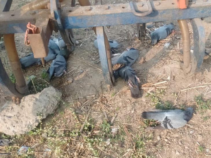 40 થી વધુ સ્થળોએથી મૃત પક્ષીઓ અને આસપાસના જીવિત પક્ષીઓના સેમ્પલો લેવાયા