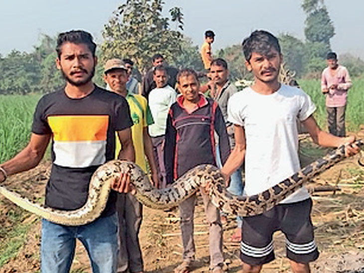 મુડત ગામે પાઈપલાઈન તોડી ફસાયેલા 9 ફૂટના અજગરને બહાર કાઢવામાં આવ્યો|મહુવા (સુરત),Mahuva (Surat) - Divya Bhaskar