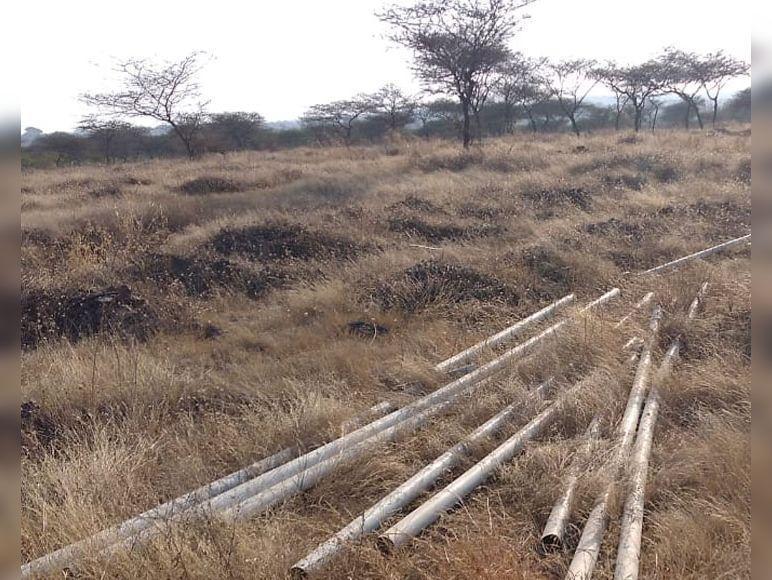 જૂના રાજપીપળા-વાદીપરા વચ્ચે 14 હેક્ટરમાં થયું હતું વૃક્ષારોપણ, અત્યારે ખડ અને ઝાંખરા|કોટડાસાંગાણી,Kotda Sangani - Divya Bhaskar