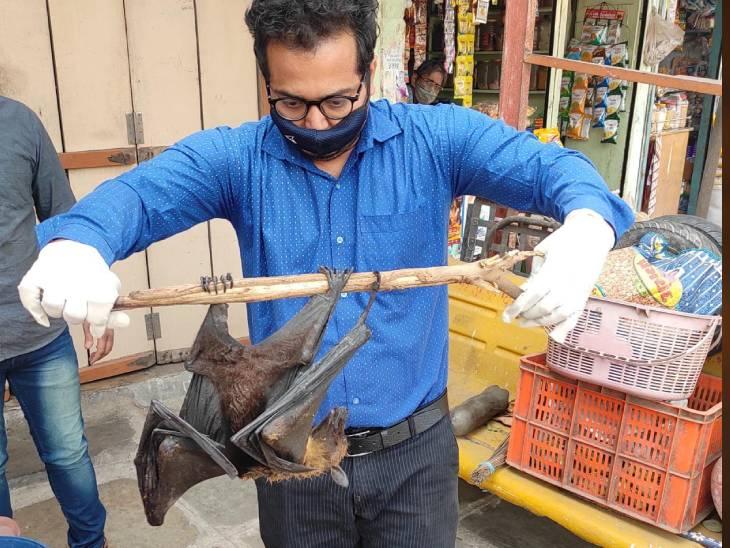 અમદાવાદના દરિયાપુરમાંથી દોરીમાં ફસાઈ ગયેલા ચામાચીડિયાનું એનિમલ લાઈફકેર દ્વારા રેસ્ક્યૂ કરાયું અમદાવાદ,Ahmedabad - Divya Bhaskar