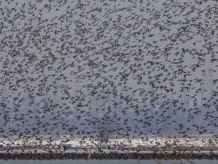 सर्दियों के मौसम के दौरान, विदेशी पक्षी कश्मीर तक पहुंचने के लिए लंबी दूरी तय करते हैं।  ये प्रवासी पक्षी पूर्वी यूरोप, जापान और तुर्की के रूप में दूर से कश्मीर पहुंचते हैं।