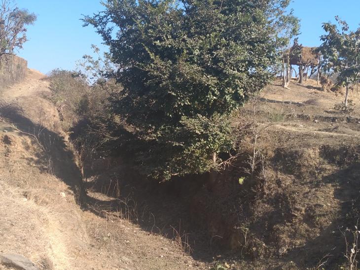 વિજયનગરના નેલાઉ તળાવની બિનઉપયોગી કેનાલમાં પાઈપલાઈન નાખવા કે પૂરી દેવા માંગ|વિજયનગર,Vijaynagar - Divya Bhaskar