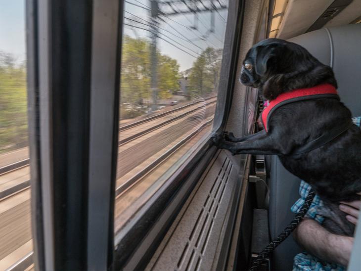 પેટ એનિમલ ને લઈ જવા માટે ફર્સ્ટ એસી મેલ એક્સપ્રેસ ટ્રેનનું ભાડું 3500 રૂપિયા