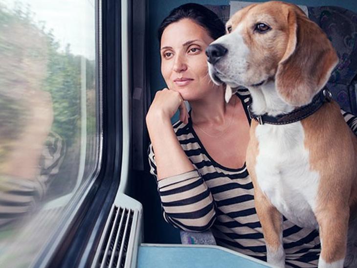 ટ્રેનમાં પાલતુ પ્રાણી લઇ જવું હશે તો ફર્સ્ટ ACની ટિકિટ બુક કરાવવી પડશે, એનિમલના વજન જેટલો લગેજ ચાર્જ લાગશે વડોદરા,Vadodara - Divya Bhaskar