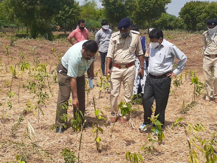 વડોદરા અને છોટાઉદેપુર જિલ્લાઓમાં નિદર્શન માટેના બે જંગલ ઉછેરવામાં આવ્યા છે