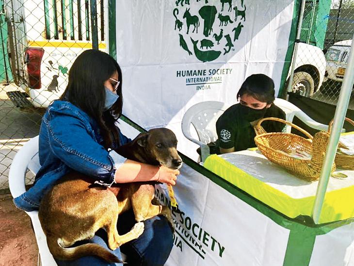 શેરી અને પાલતુ કૂતરાની વધતી વસ્તીને અટકાવવા ખસીકરણ-રસીકરણ ઝૂંબેશ વડોદરા,Vadodara - Divya Bhaskar
