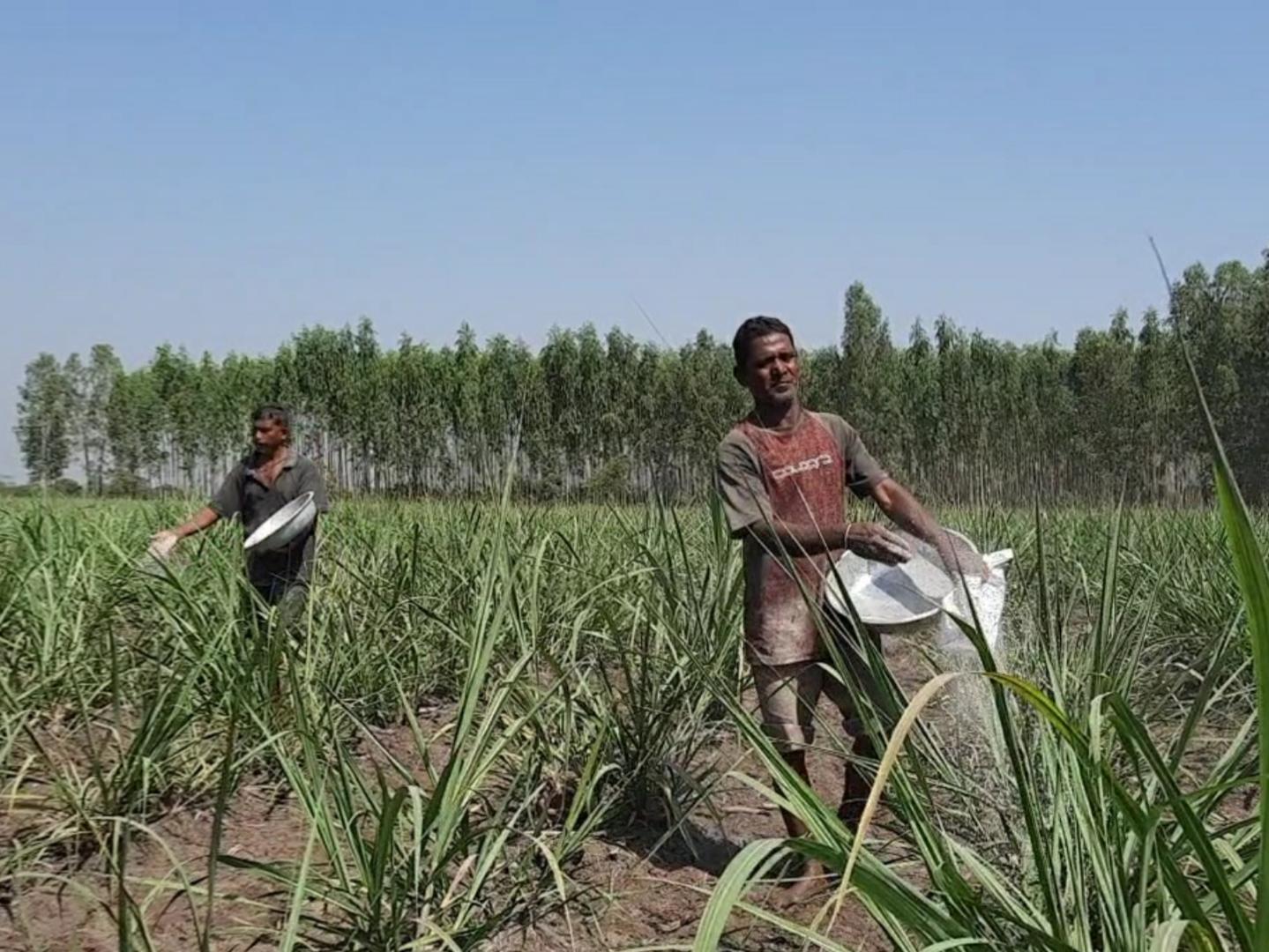 પેટ્રોલ ડીઝલના ભાવ વધારા બાદ ખેડૂતોને વધુ એક ઝટકો, માર્ચમાં વધશે ASP, DAP અને NPK ખાતરના ભાવ નવસારી,Navsari - Divya Bhaskar