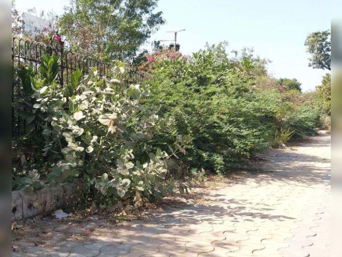 જિલ્લા સેવા સદનની બહાર ઉગી નીકળેલ ઝાડી ઝાંખરા. - Divya Bhaskar