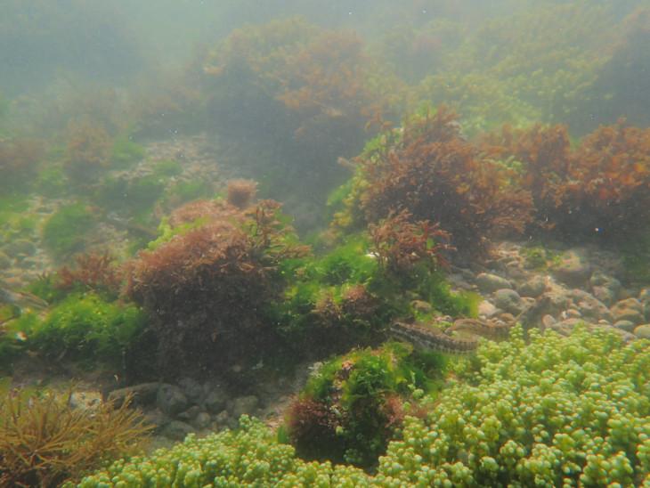 દરિયામાં માત્ર 10 ફૂટની ઉંડાઈએથી દૃશ્ય - Divya Bhaskar