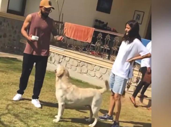 અનુષ્કા શર્માએ વીડિયોમાં વર્ષ 2020ની યાદગાર પળ શેર કરી, વિરાટ કોહલી સાથે શ્વાન સાથે રમતી દેખાઈ|બોલિવૂડ,Bollywood - Divya Bhaskar