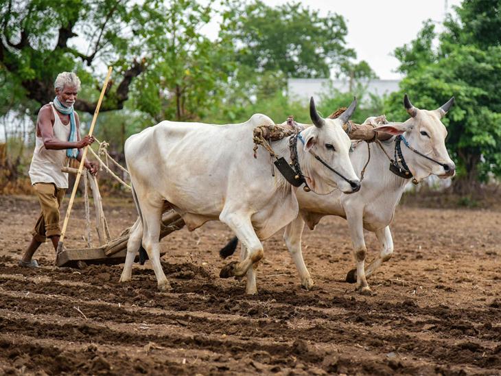 પાક ધિરાણની રકમ ચૂકવવાની મુદત 30 જૂન સુધી લંબાવાઈ, સમયસર ચૂકવશે તો વ્યાજ પણ માફ થશે અમદાવાદ,Ahmedabad - Divya Bhaskar