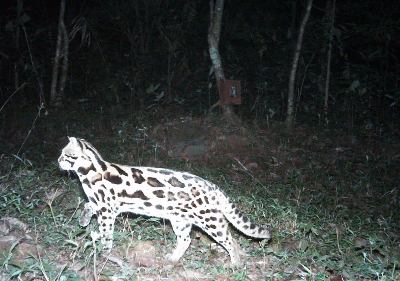 ભારતના જંગલમાં જોવા મળ્યું વિચિત્ર પ્રાણી, જે ચીત્તા જેવું દેખાય છે, સો. મીડિયા પર તસવીર વાઈરલ|લાઇફસ્ટાઇલ,Lifestyle - Divya Bhaskar