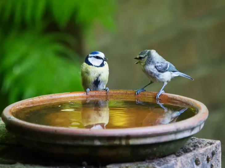 અમાસના દિવસે પક્ષીઓ માટે પાણીની વ્યવસ્થા કરવી