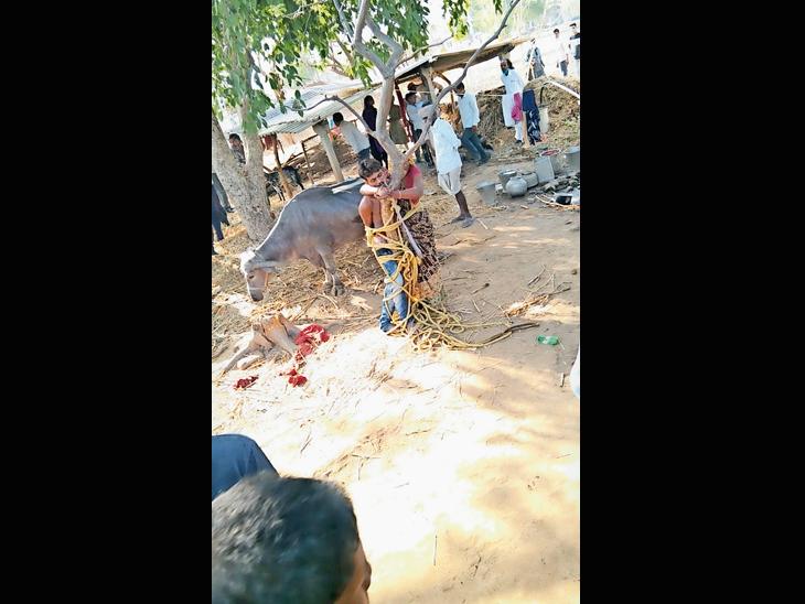 ખીલોડમાં મહિલા-પુરુષને ઝાડ સાથે બાંધેલો વીડિયો વાયરલ : 9 સામે પોલીસ કાર્યવાહી|ગોધરા,Godhra - Divya Bhaskar