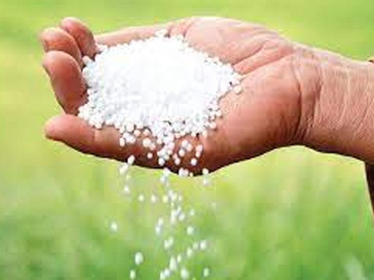 ખાતરનો ભાવ વધારો પાછો નહીં ખેંચવામાં આવે તો રાજ્યના ખેડૂતોનું 19મીએ ઉપવાસ આંદોલન નવસારી,Navsari - Divya Bhaskar