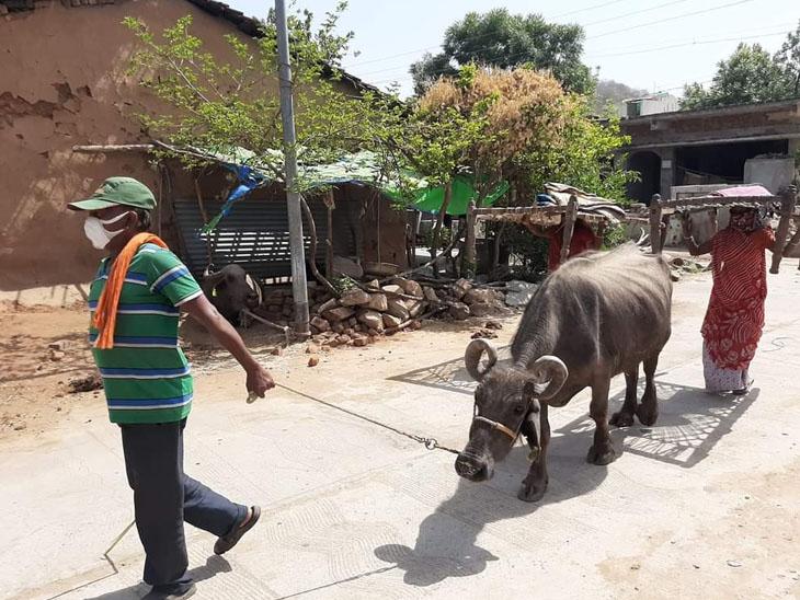કોરોનાથી બચવા ગ્રામજનો ઢોરઢાંખર સાથે ખેતરોમાં સરસામાન સાથે રહેવા મજૂબર બન્યા છે. - Divya Bhaskar