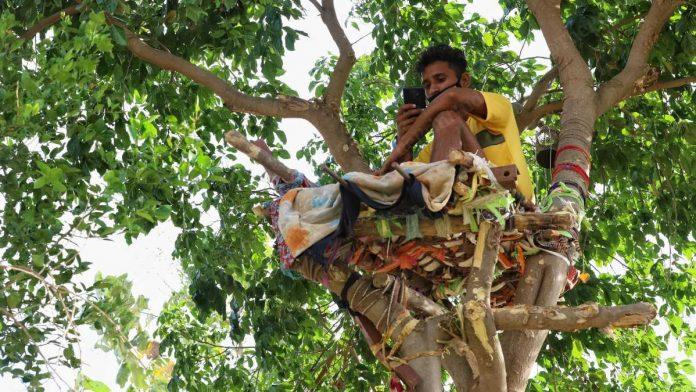 ઘરમાં જગ્યા ના હોવાથી 18 વર્ષનો કોરોના પોઝિટિવ વિદ્યાર્થી વૃક્ષ પર 11 દિવસ સુધી આઈસોલેટ થયો લાઇફસ્ટાઇલ,Lifestyle - Divya Bhaskar