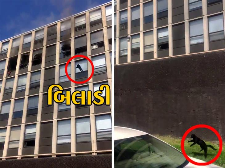 શિકાગોમાં એક બિલ્ડિંગમાં 5માં માળે આગ લાગતાં બિલાડી નીચે કૂદી, છતાં જરા પણ ઇજા થઈ નહીં વર્લ્ડ,International - Divya Bhaskar