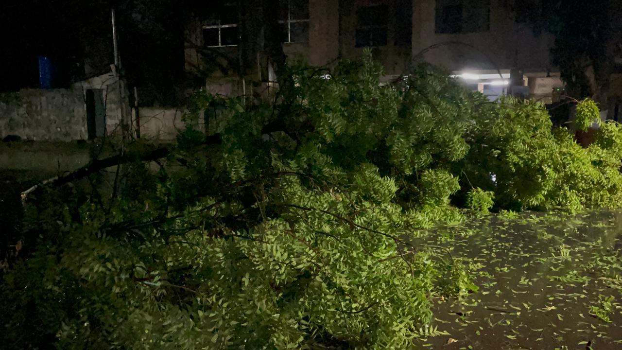 રાજકોટમાં તાઉ-તે વાવાઝોડાને કારણે વરસાદ સાથે ભારે પવન ફૂંકાતાં વીજપુરવઠો ખોરવાયો, વૃક્ષ ધરાશાયી, અનેક જગ્યાએ લાઇટ ડૂલ|રાજકોટ,Rajkot - Divya Bhaskar