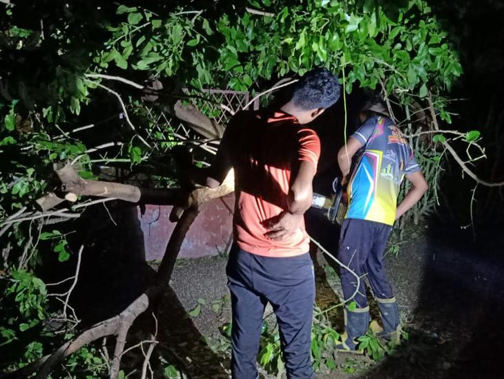 સુરતમાં વાવાઝોડાની અસરના કારણે બે દિવસમાં કુલ 600થી વધુ વૃક્ષો પડ્યા, રાત્રે પણ વધુ 13 વૃક્ષો પડતા ફાયર વિભાગ દોડતું રહ્યું સુરત,Surat - Divya Bhaskar