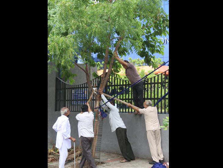 વાવાઝોડાથી ધરાશાયી વૃક્ષોના 200 ટનથી વધુ લાકડા વેચવાને બદલે સ્મશાનમાં અપાશે, પડેલા 1 સામે 3 રોપાશે સુરત,Surat - Divya Bhaskar