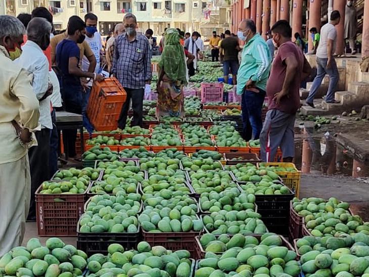 દક્ષિણ ગુજરાતમાં ખરી પડેલી 17,130 ટન કેરી 200 રૂપિયે મણ વેચાઈ; વાવાઝોડા પહેલાં હાફુસ-કેસર 1100થી 1400 રૂપિયે મણ વેચાતી હતી|સુરત,Surat - Divya Bhaskar
