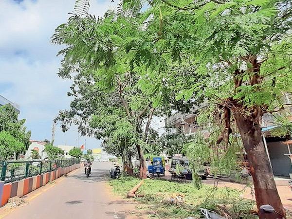 બારડોલીમાં ધરાશાયી વૃક્ષો 2 દિવસે પણ ન ખસેડાતા રોષ બારડોલી,Bardoli - Divya Bhaskar