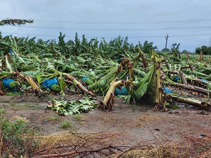 તાઉ-તે વાવાઝોડાના પગલે સુરત જિલ્લામાં થયેલા નુકસાનનો સર્વે પૂર્ણ, 757 ગામોમાં 33 ટકા લેખે 5826 હેકટરમાં પાકનું નુકસાન સુરત,Surat - Divya Bhaskar