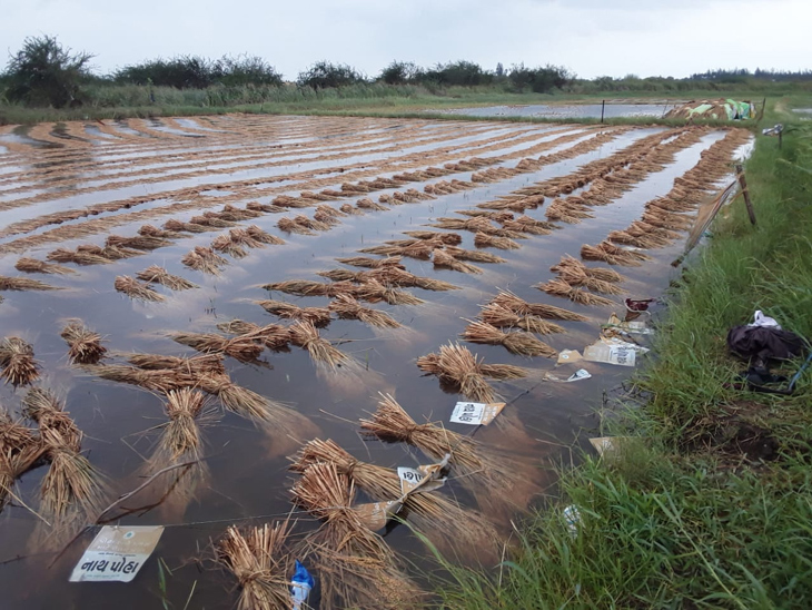 ખેડૂતોને તાઉ-તે વાવાઝોડાના નુકસાન વળતર મળવાની સંભાવના, આવતીકાલની કેબિનેટ બેઠક બાદ પેકેજ જાહેર થઈ શકે|અમદાવાદ,Ahmedabad - Divya Bhaskar