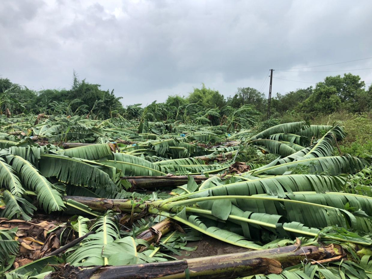 વાવાઝોડાથી બાગાયતી પાકના ઇજારદારોને થયું મોટું નુકસાન|અમરેલી,Amreli - Divya Bhaskar