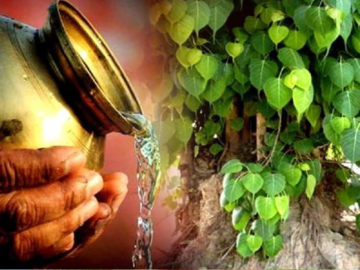 પીપળાની પૂજા કરવાથી ભગવાન વિષ્ણુની કૃપા મળે છે અને પિતૃઓ પણ સંતુષ્ટ થાય છે