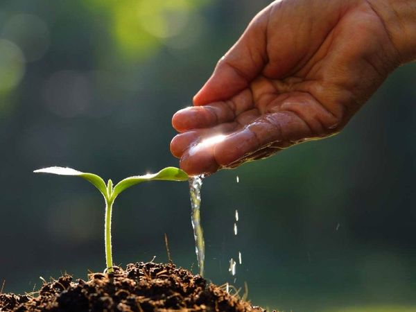 આ દરમિયાન ઝાડ-છોડ વાવવાની પરંપરા છે, આ કામથી મળતું પુણ્ય ક્યારેય નષ્ટ થતું નથી|ધર્મ,Dharm - Divya Bhaskar