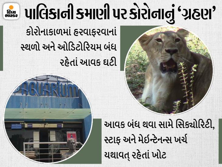 સુરતમાં કોરોનાકાળમાં પ્રાણી સંગ્રહાલય, એક્વેરિયમ અને સાયન્સ સેન્ટર સહિતના પ્રોજેક્ટની આવક ઘટીને 52 લાખ થઈ|સુરત,Surat - Divya Bhaskar