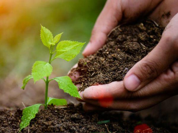 આ મહિનામાં દિવસે ન સૂવું, મસાલેદાર ભોજન અને તડકામાં ફરવાથી પણ બચવું જોઈએ|ધર્મ,Dharm - Divya Bhaskar