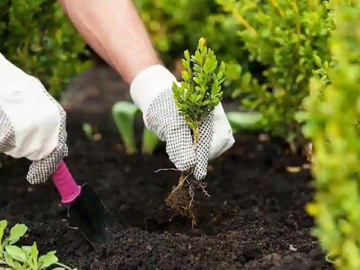 બે વર્ષમાં ગ્રીનકવર 4.66 ટકાથી વધીને 10.13 ટકા થયું, આ વર્ષે 13.4 લાખ વૃક્ષ વવાશે|અમદાવાદ,Ahmedabad - Divya Bhaskar