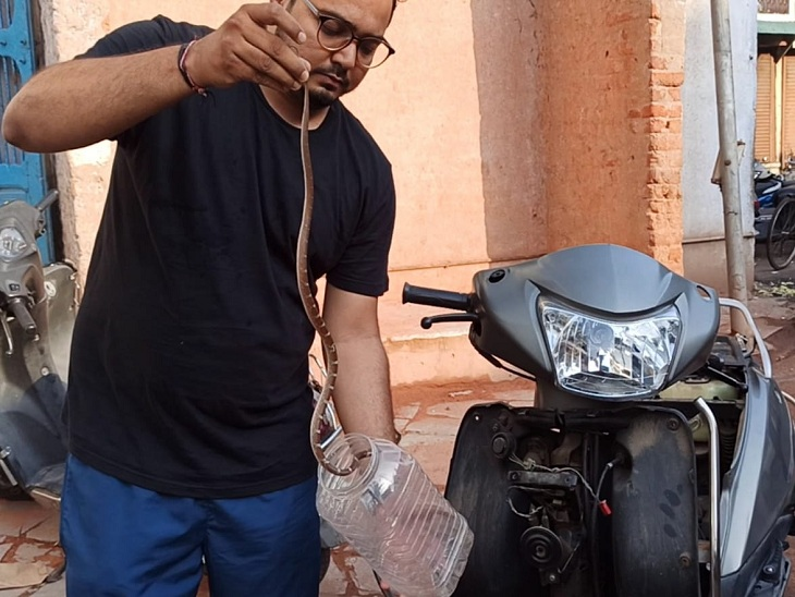અમદાવાદમાં ચાલુ એક્ટિવામાંથી સાપ બહાર નીકળતા ચાલક વાહન મૂકીને ભાગ્યો, એનિમલ લાઈફ કેરે 2 ફૂટના સાપનું રેસ્ક્યું કર્યું અમદાવાદ,Ahmedabad - Divya Bhaskar