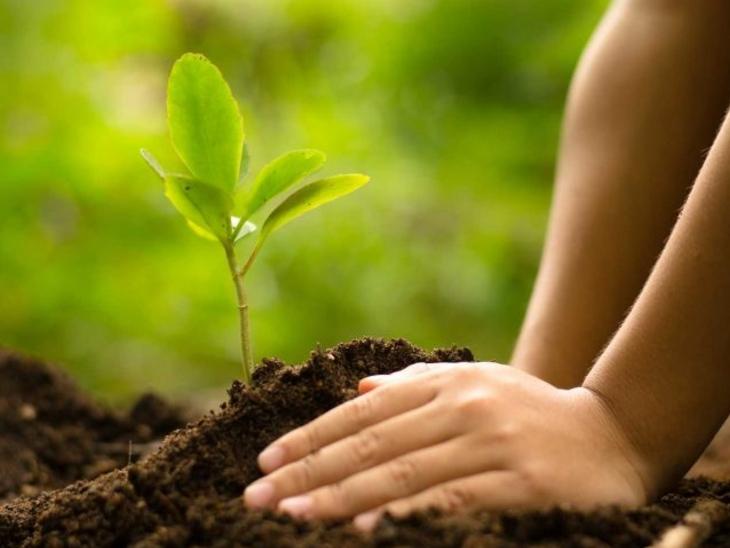 વૈશાખ અમાસના દિવસે રોહિણી નક્ષત્રનો યોગ, આ સંયોગમાં ઝાડ-છોડ વાવવા શુભ રહેશે|ધર્મ,Dharm - Divya Bhaskar
