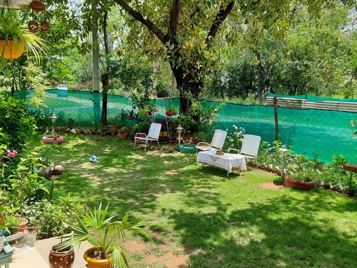 યુવકે ઘરને વન્ડર લેન્ડ બનાવ્યું,વૃક્ષો અને ફૂલ - છોડ ઉછેરીને વાતાવરણને શુદ્ધ કર્યું ભરૂચ,Bharuch - Divya Bhaskar