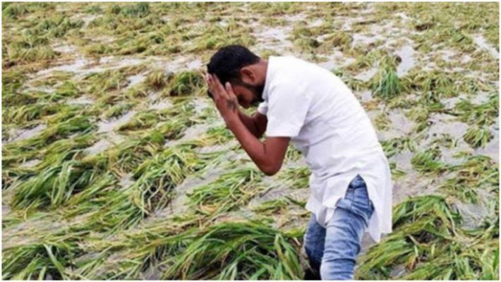 આણંદમાં તાઉ-તે વાવાઝોડાથી અસરગ્રસ્ત ખેડૂતોને સહાય ન મળતાં નિરાશા, પશુ મૃત્યુ સહાય 2 લાખ ઉપરાંતની ચૂકવાઈ આણંદ,Anand - Divya Bhaskar