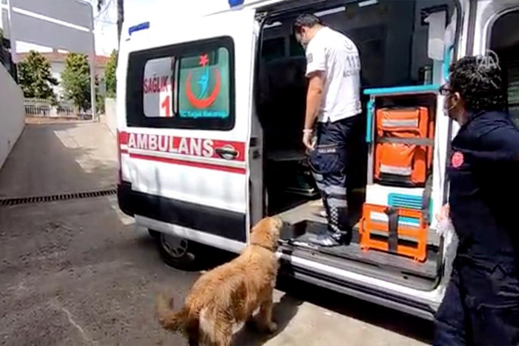 તુર્કીમાં મહિલાને હોસ્પિટલ લઈ જતા તેનું પાલતું શ્વાન આખા રસ્તે એમ્બ્યુલન્સ પાછળ ભાગ્યું, હજુ પણ હોસ્પિટલમાં માલિકની રાહ જુએ છે|લાઇફસ્ટાઇલ,Lifestyle - Divya Bhaskar
